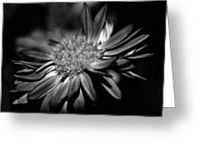 Bold Black And White Flower Greeting Card
