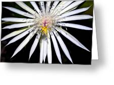Bold Cactus Flower Greeting Card