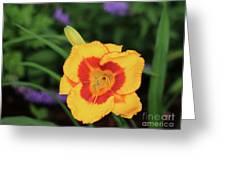 Bold  Daylily Greeting Card