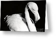 Bold Elegance Greeting Card