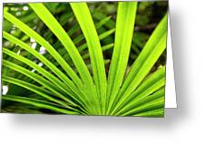 Bold Fronds 0 Greeting Card