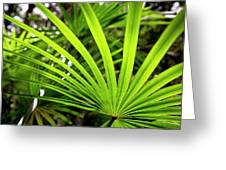 Bold Fronds 1 Greeting Card