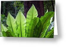 Bold Fronds 11 Greeting Card