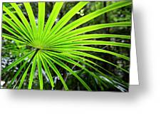 Bold Fronds 3 Greeting Card