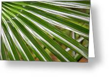 Bold Fronds 4 Greeting Card
