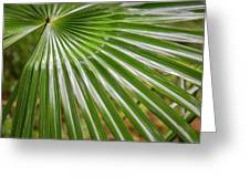 Bold Fronds 5 Greeting Card