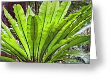 Bold Fronds 8 Greeting Card