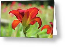 Bold Red - Daylily Greeting Card