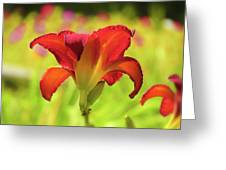 Bold Red Gold - Daylily Greeting Card