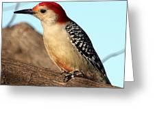 Bold Woodpecker Greeting Card