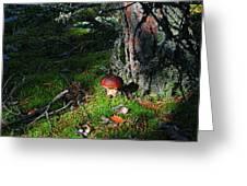Boletus Mushroom Greeting Card