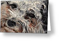 Bolognese Breed Greeting Card