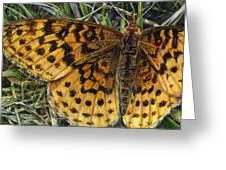Boloria Bellona Greeting Card