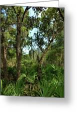 Bon Secour Trail Greeting Card