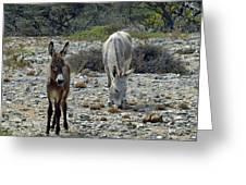 Bonaire Wild Donkeys 2 Greeting Card
