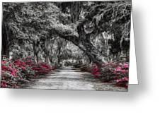 Bonaventure Cemetery Bw Greeting Card