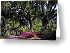 Bonaventure Cemetery IIi Greeting Card