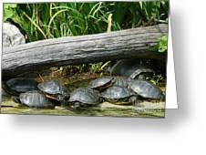 Bonding Box Turtles Greeting Card