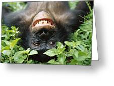 Bonobo Smiling Greeting Card