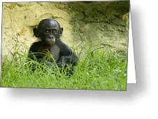Bonobo Tyke Greeting Card