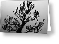 Bonsai Black And White Greeting Card