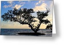 Bonsai Inspiration Greeting Card