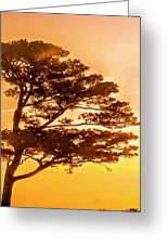 Bonsai Pine Sunrise Greeting Card