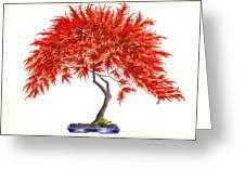 Bonsai Tree - Inaba Shidare Greeting Card