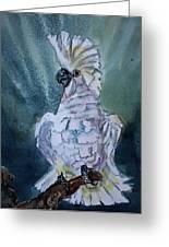 Boo The Umbrella Cockatoo Greeting Card