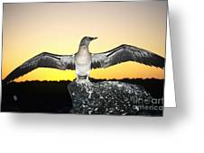 Booby At Sunset Greeting Card