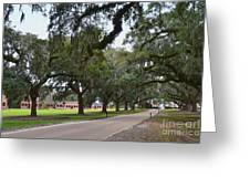 Boone Hall Plantation Greeting Card