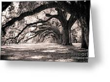 Boone Hall Plantation Live Oaks Greeting Card