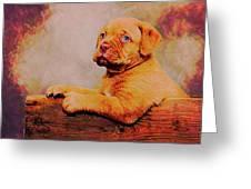 Bordeaux Mastiff Pup Greeting Card