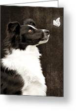 Border Collie Dog Watching Butterfly Greeting Card