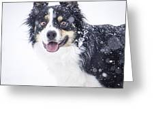 Border Collie In The Snow Greeting Card