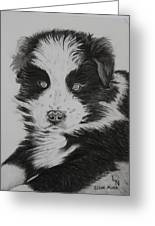 Surprised Border Collie Puppy Greeting Card