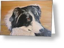 Border Collie Study Greeting Card