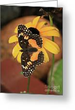 Bordered Patch Greeting Card