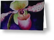 Borneo Orchid P Chiquita Greeting Card