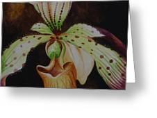 Borneo Orchid P Lebaudyanum Greeting Card