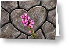 Boronia Love Greeting Card