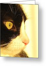 Bosco A Greeting Card