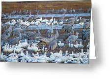 Bosque Cranes And Geese Greeting Card