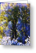 Bosque Glow And Chantilly Snow Greeting Card