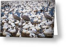 Bosque Waterfowl Mix Greeting Card