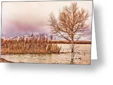 Bosque Winter II Greeting Card