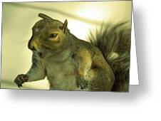 Bossy Squirrel Greeting Card