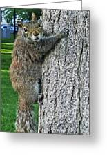 Boston Common Squirrel Hanging From A Tree Boston Ma Greeting Card