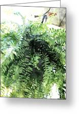 Boston Fern With Visitor Greeting Card