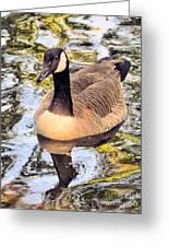 Boston Public Garden Goose Greeting Card
